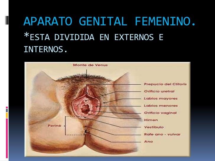 Bonito Partes Privadas Anatomía Femenina Patrón - Anatomía de Las ...