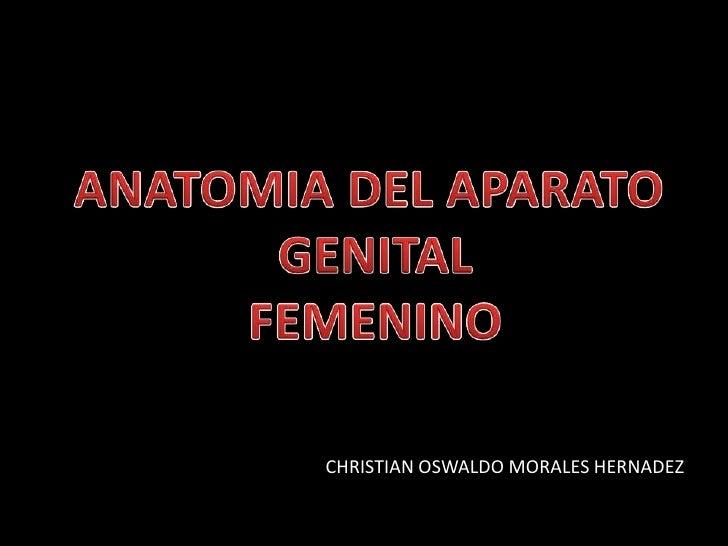 CHRISTIAN OSWALDO MORALES HERNADEZ<br />ANATOMIA DEL APARATO <br />GENITAL<br />FEMENINO<br />