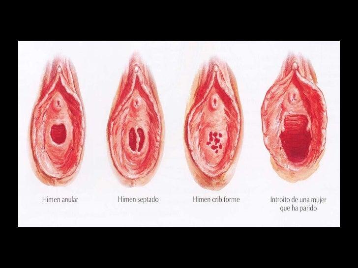 Anatomia del aparato genital femenino I
