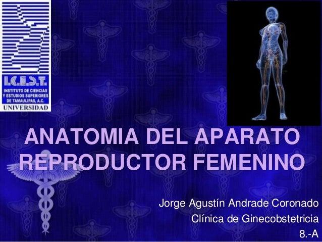 ANATOMIA DEL APARATO REPRODUCTOR FEMENINO Jorge Agustín Andrade Coronado Clínica de Ginecobstetricia 8.-A