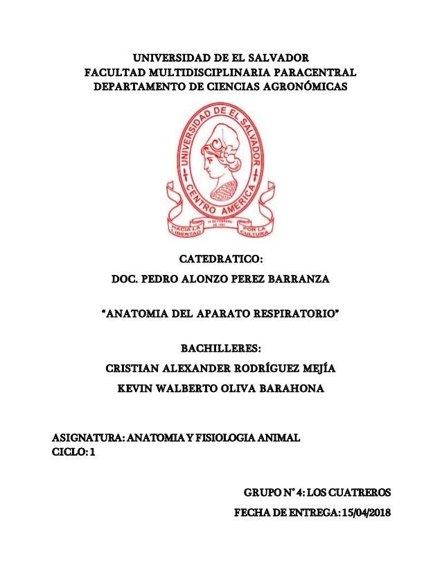 anatomia-del-aparato-respiratorio-1-638.jpg?cb=1523851316