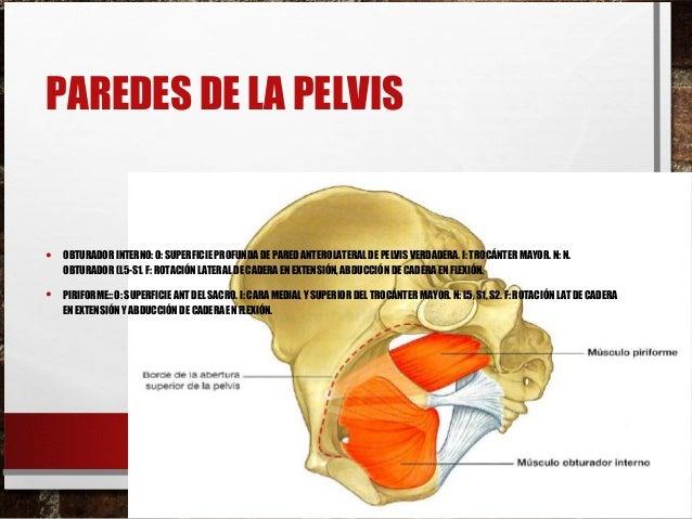 Anatomia de la pelvis ilustra
