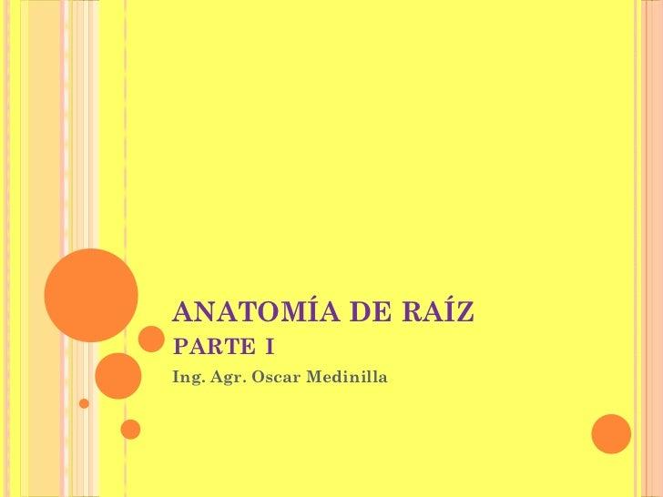 ANATOMÍA DE RAÍZPARTE IIng. Agr. Oscar Medinilla