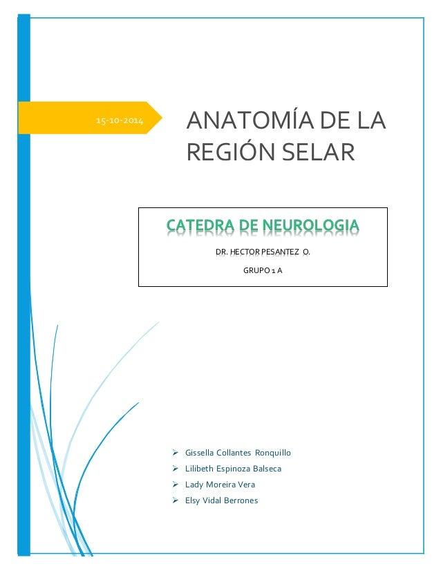 Anatomia de la región selar