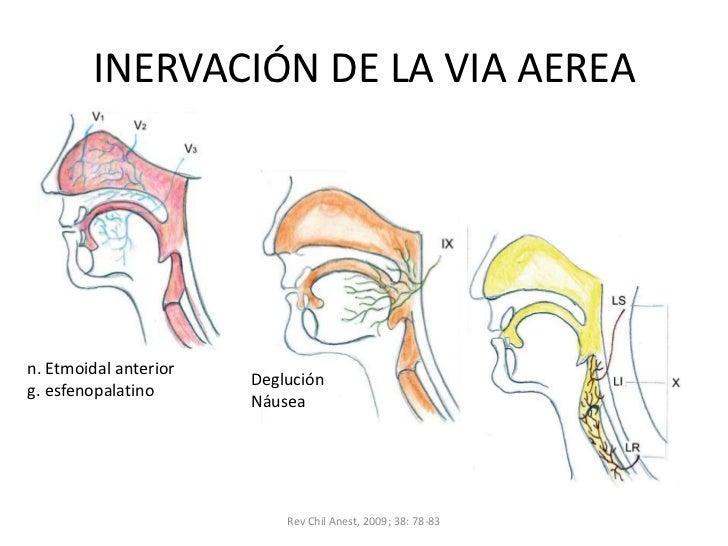 Anatomia de la via aerea
