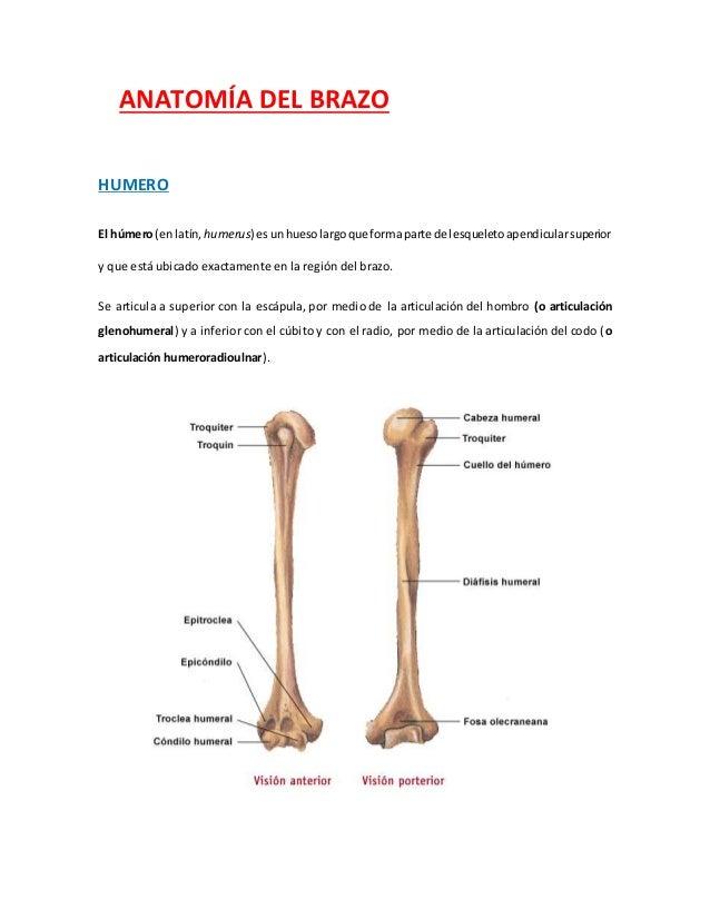 Anatomía Radiológica del Brazo 6ª Parte