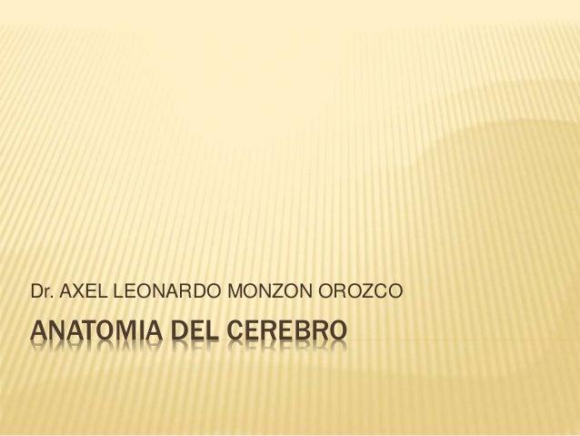 ANATOMIA DEL CEREBRO Dr. AXEL LEONARDO MONZON OROZCO