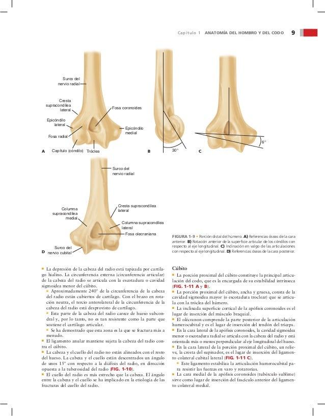 Lujo Anatomía Del Codo Composición - Imágenes de Anatomía Humana ...