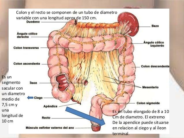 Anatomia del colon , preparacion del colon para cirugia