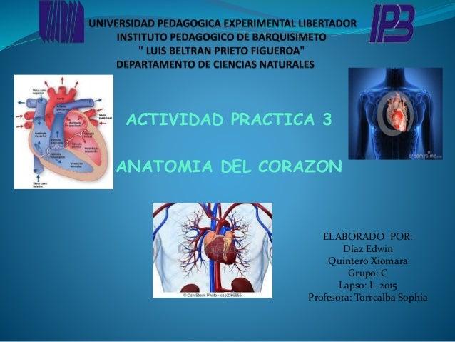 ACTIVIDAD PRACTICA 3 ANATOMIA DEL CORAZON ELABORADO POR: Díaz Edwin Quintero Xiomara Grupo: C Lapso: I- 2015 Profesora: To...