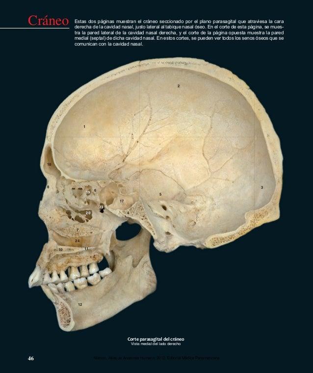 Anatomia del craneo atlas de nielsen