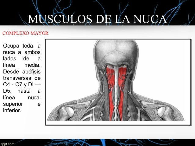 Jonathan Valenzuela Morales: Anatomía Del Cuello
