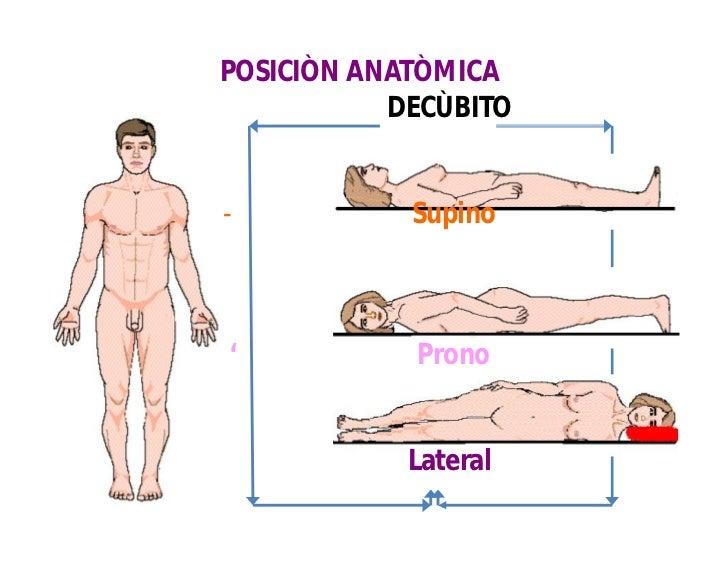 Atractivo Lo Que Quiere Decir En Posición Supina En La Anatomía ...