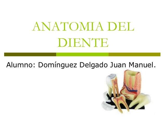 ANATOMIA DEL         DIENTEAlumno: Domínguez Delgado Juan Manuel.