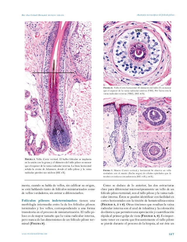 Anatomia del foliculo piloso