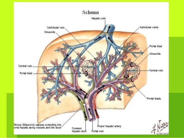 Las complicaciones postoperacionales de la enfermedad varicosa