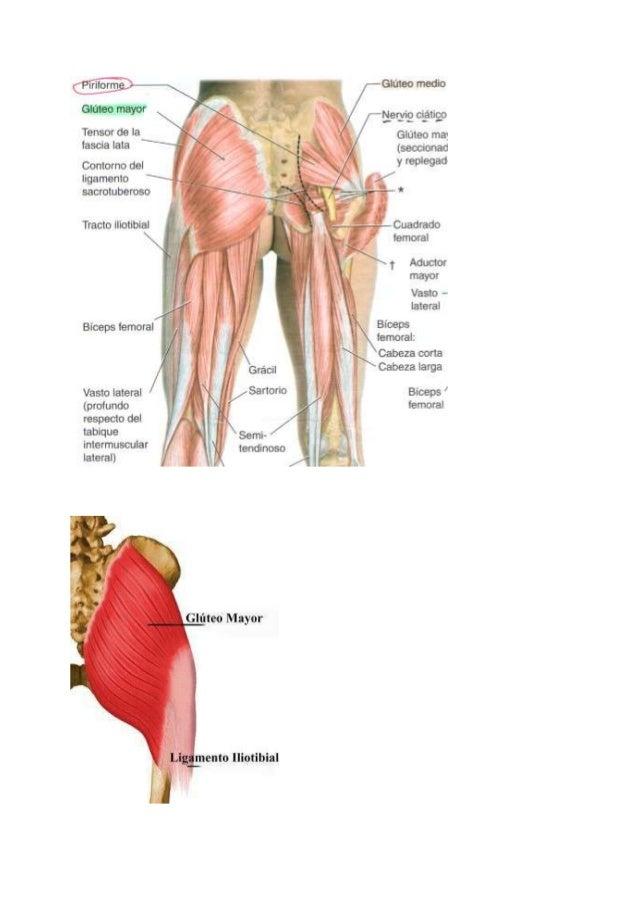 Anatomia del miembro inferior