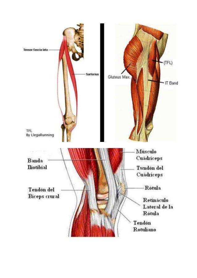 Lujo Que La Banda Anatomía Foto - Imágenes de Anatomía Humana ...