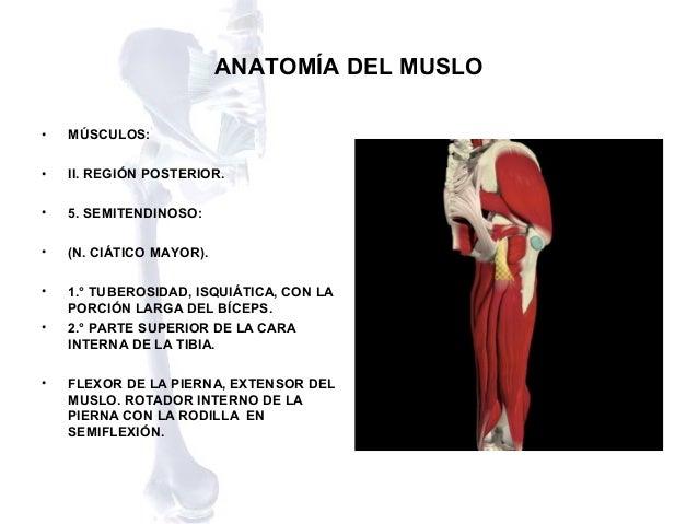 Anatomia del muslo