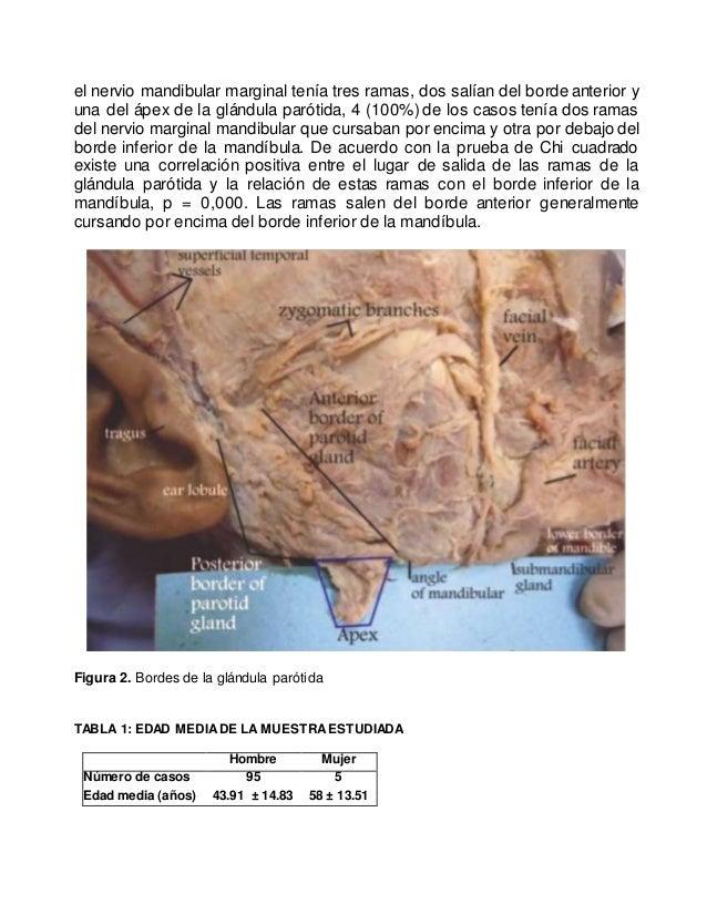 NERVIO MARGINAL MANDIBULAR Y SU RELACIÓN CON EL BORDE INFERIOR DE LA …