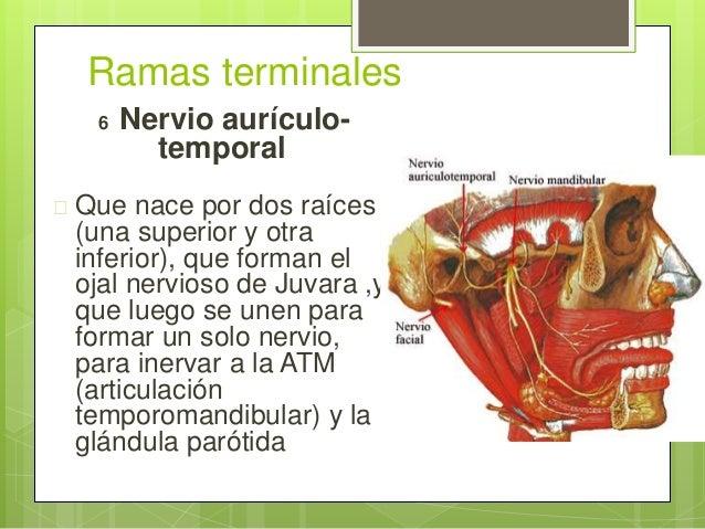 Anatomia del nervio trigemino