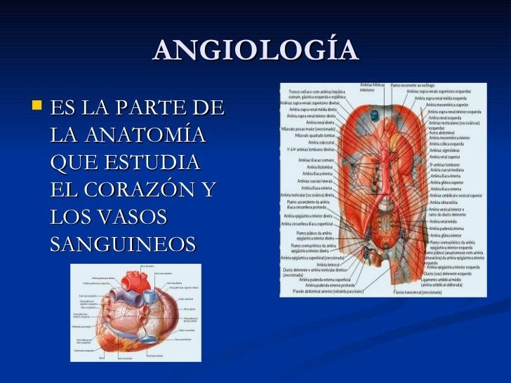 Anatomia de los animales de laboratorio