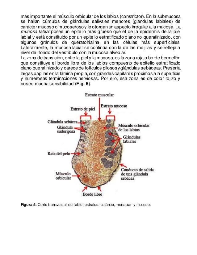 Contemporáneo Ver La Anatomía Grises En Línea Libre Cucirca Modelo ...