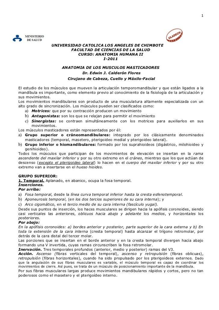 ANATOMIA DE LOS MUSCULOS MASTICADORES