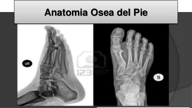 Anatomia osea del pie