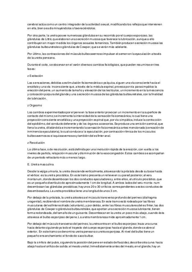 Hermosa Anatomía Posterior Vuelta Viñeta - Imágenes de Anatomía ...