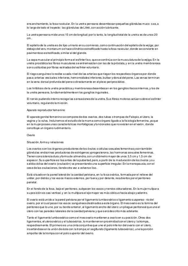 Encantador Anatomía Eje Del Pene Imagen - Anatomía de Las ...
