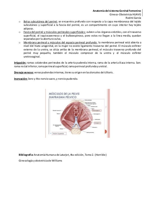 Anatomia del sistema reproductor femenino final