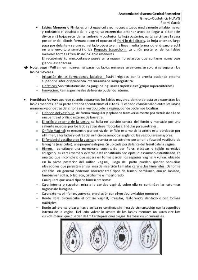 Único Foto Marcada Del Sistema Reproductor Femenino Imágenes ...