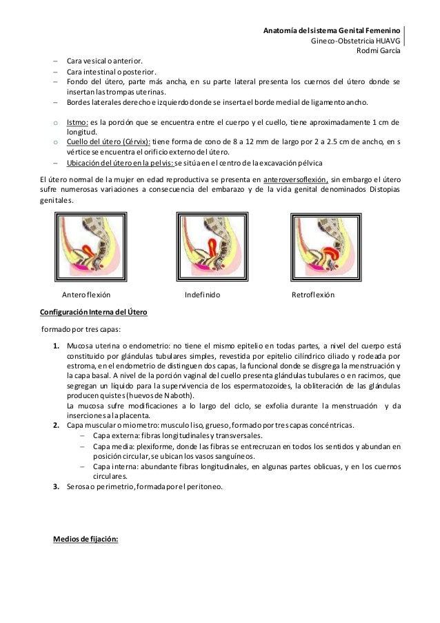 Encantador Canguro De La Anatomía Genital Friso - Anatomía de Las ...