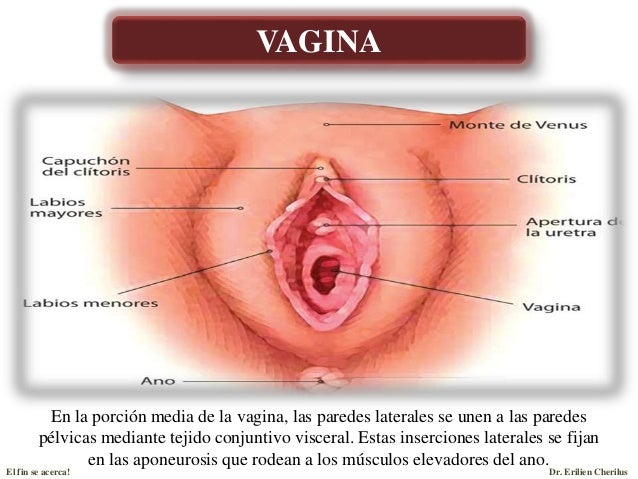 Anatomia del Sistema Reproductor Femenino - Parte I