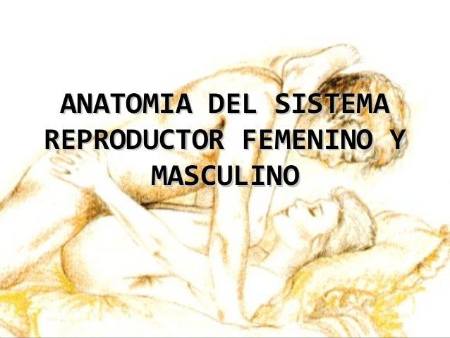 anatomia-del-sistema-reproductor-femenino-y-masculino -1-638.jpg?cb=1377172511