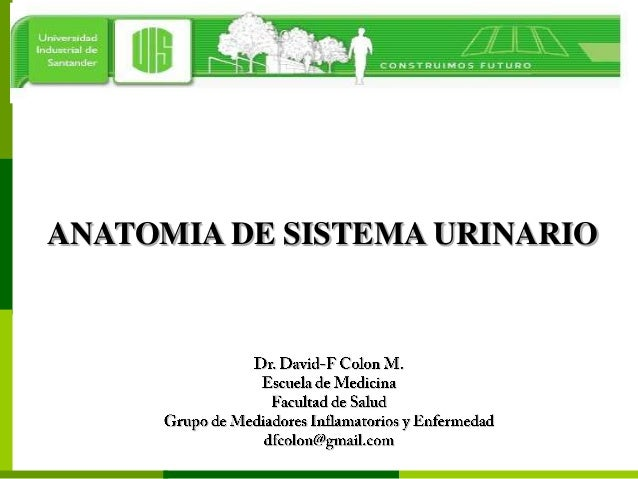 ANATOMIA DE SISTEMA URINARIO