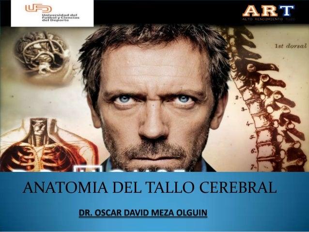 ANATOMIA DEL TALLO CEREBRAL