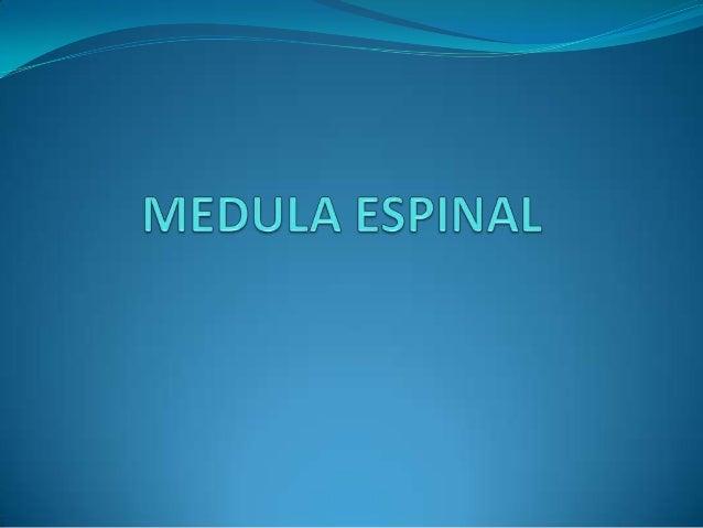 ANATOMÍA DEL TALLO CEREBRAL Slide 2