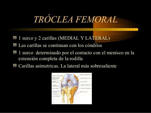 Anatomia de mecanismo extensor de la rodilla