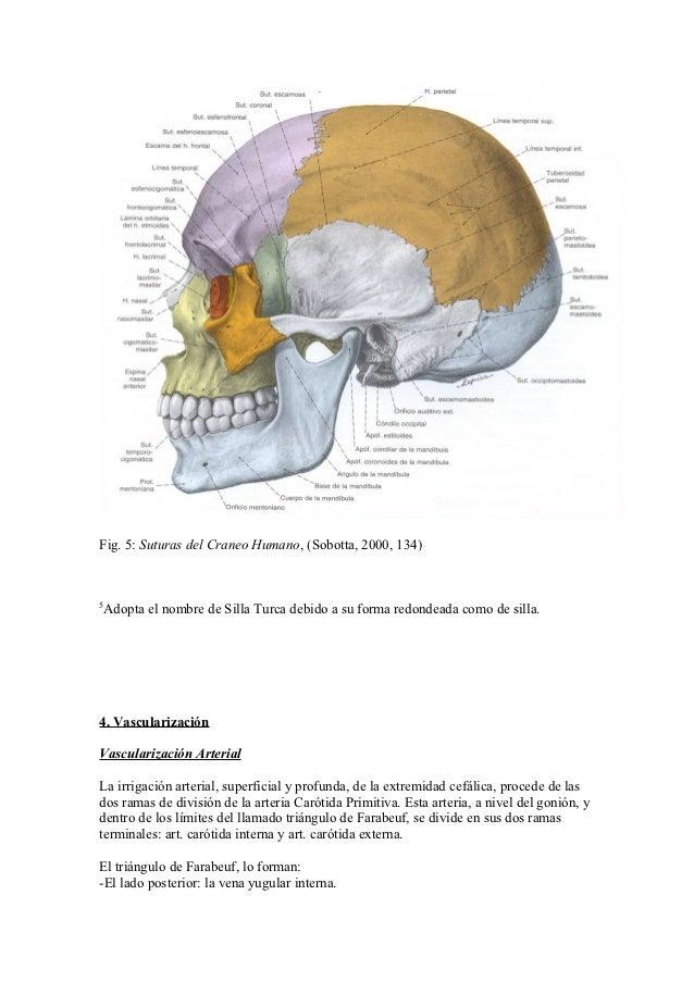 Anatomia de medicina y odontología
