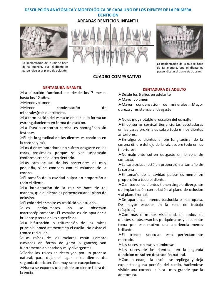 DESCRIPCIÓN ANATÓMICA Y MORFOLÓGICA DE CADA UNO DE LOS DIENTES DE LA PRIMERA                                 DENTICIÓN    ...