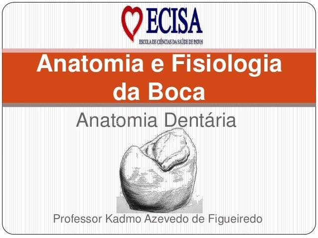 Anatomia Dentária Anatomia e Fisiologia da Boca Professor Kadmo Azevedo de Figueiredo