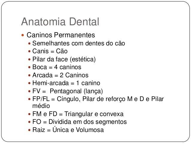 Conhecido anatomia-dental-21-638.jpg?cb=  OP68
