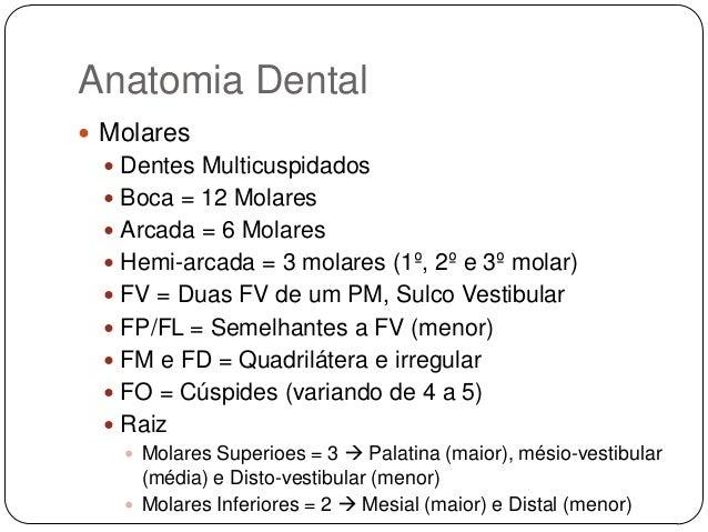 Muitas vezes anatomia-dental-26-638.jpg?cb=  BT98
