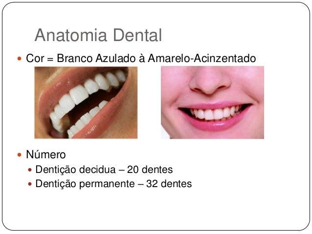 Muitas vezes anatomia-dental-5-638.jpg?cb=  SK68