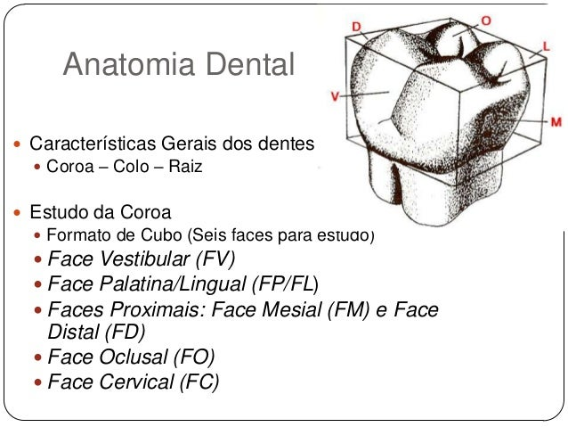 Super anatomia-dental-8-638.jpg?cb=  AP09