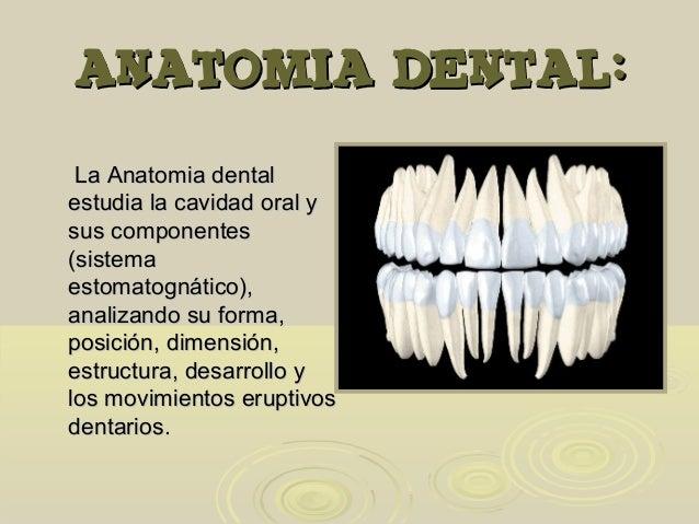 Anatomia dental clase