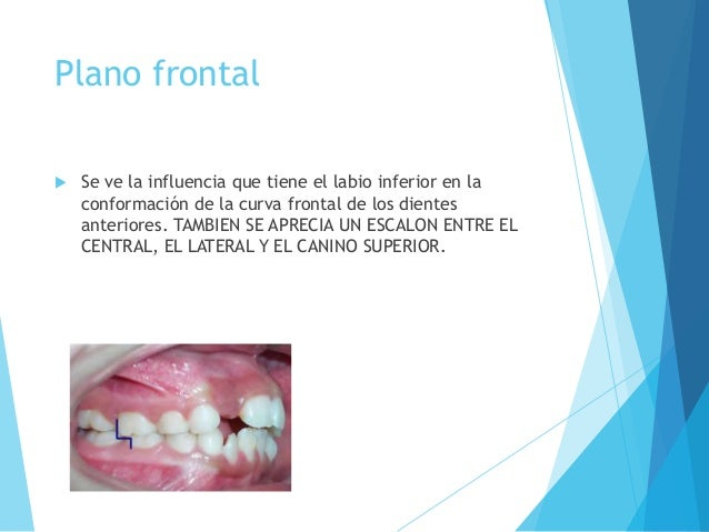 Anatomia dental aplicada