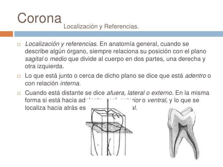 Anatomia dental cap 2